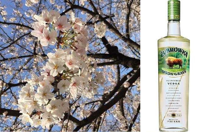 桜の季節に、桜餅の香りのお酒ズブロッカを